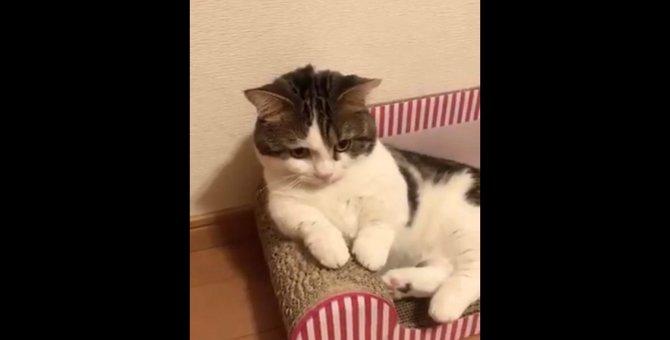 やべ、動画撮られてた!急に猫らしくする『プロ意識の高い猫さん』が話題