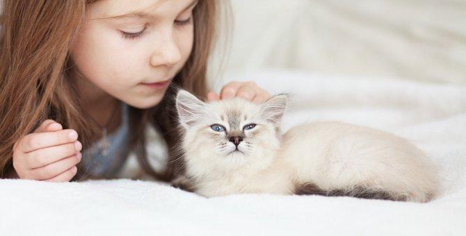 愛猫から目を離してはいけない6つのタイミング