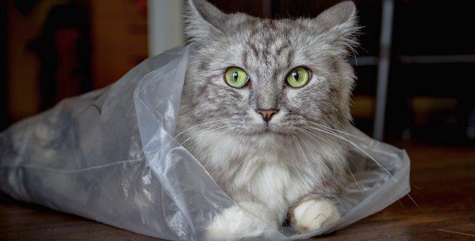 猫が紙袋やビニール袋で遊ぶ時の注意点4つ