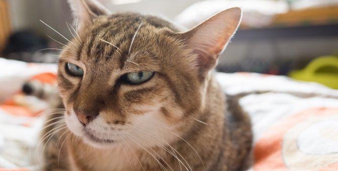 猫が嫌っている人だけにする態度3つ