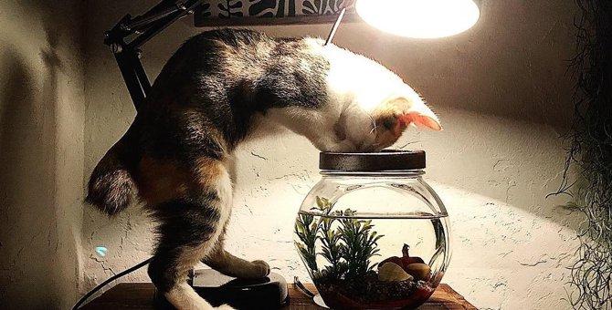 こんなもので?猫がびっくりしてしまう意外なもの3選