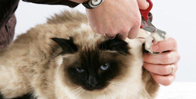 猫の爪切り方法の注意点と暴れる時の対処法