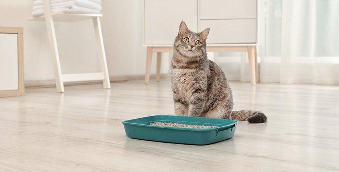 猫のうんちに虫が!対処法や注意点