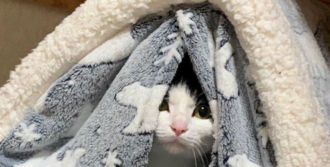 大人気♡『にゃせいふは見た!』隙間からこっそり覗く猫さん