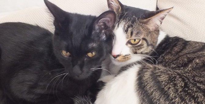 捨てられた子猫の里親に!病院からもらい受けるケースの体験談