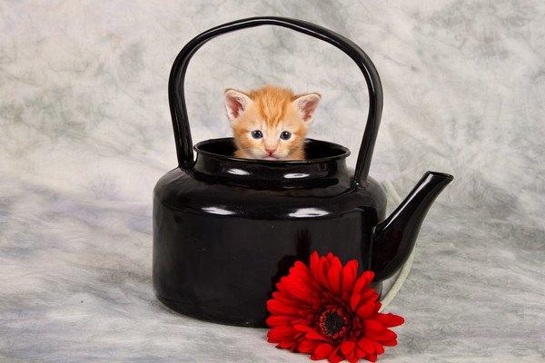猫の急須でほっこりティータイムはいかが?おすすめ商品6選