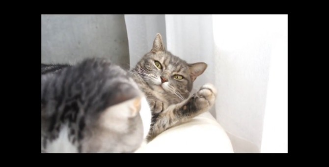 猫ちゃんに座布団にされたチビ猫ちゃんのささやかな復讐