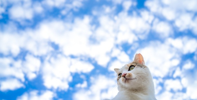 猫にもダウン症は起こるのか そのメカニズムと特徴