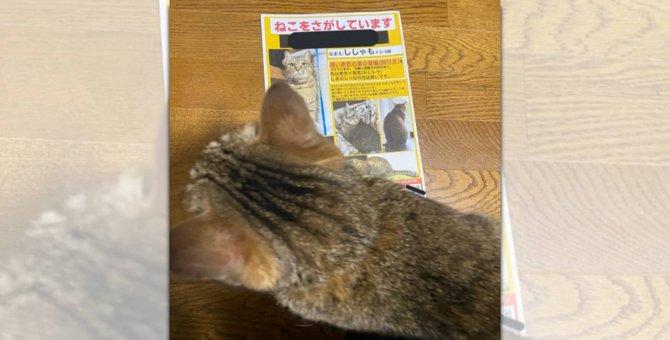 愛猫が脱走!泣きながら朝までかけてポスターを作製した結末が話題