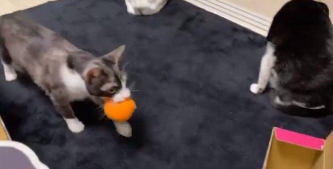 【天才】『お届けに参りました』ボールを箱にしまう猫さんが話題♡