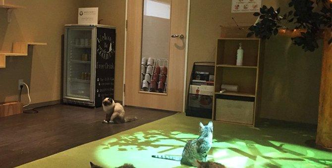 品川の猫カフェおすすめ3選!保護猫を譲ってもらえるお店も