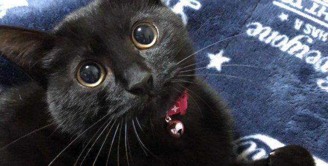 愛猫が宙を見つめている理由5つ