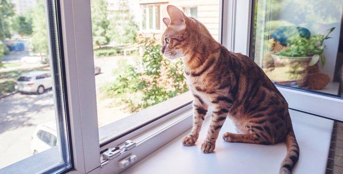 猫が声をかけると『しっぽ』を動かして応じるときの意味5つ