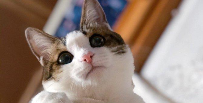 LAYLAの12猫占い【4/27〜5/3】のあなたと猫ちゃんの運勢