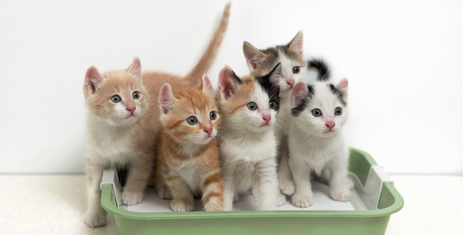 子猫のトイレトレーニング方法と注意する点