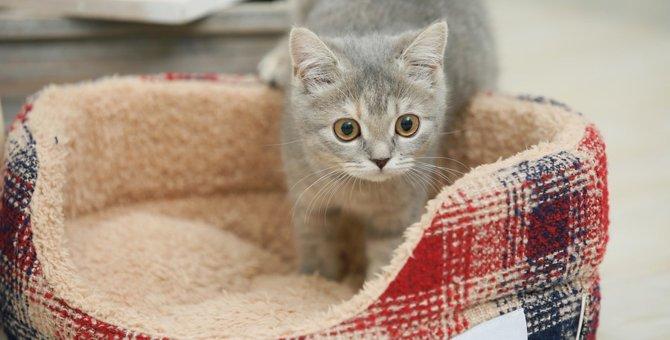 冬用猫ベッドの特徴と選び方とは?おすすめ商品6選