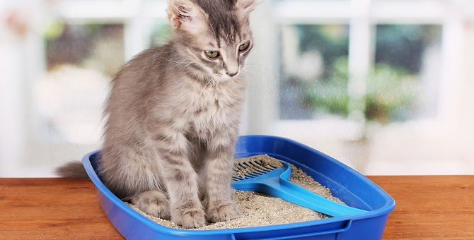 猫のおしっこが出ない原因とは?考えられる病気や対処法について