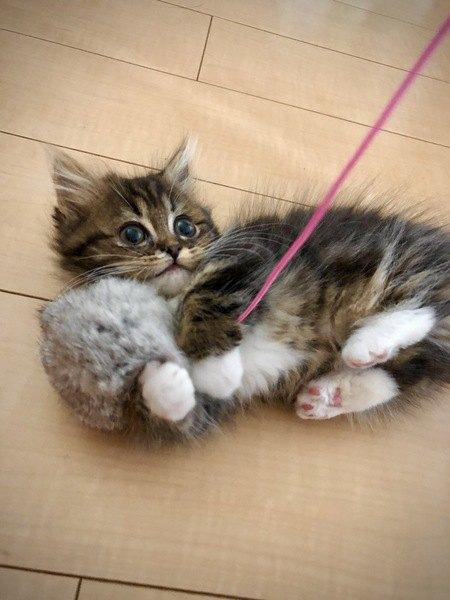 横着な猫に楽しく遊んでもらう方法5つ