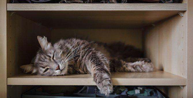 猫が暮らしやすいお家にするための『14カ条』