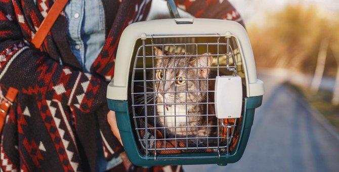 猫と電車に乗る時に必要な準備と注意点3つ