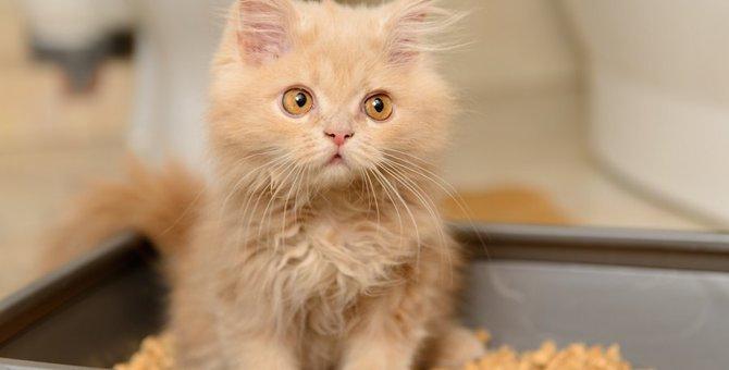 鉱物系の猫砂おすすめ人気ランキング10選、捨て方も紹介