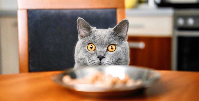 いますぐ改めて!猫の危険な問題行動9つ
