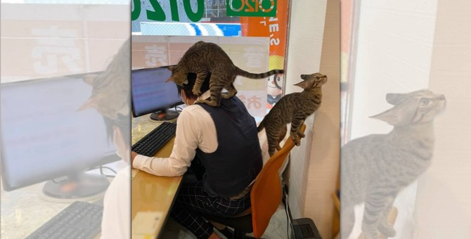 就職したい人続出!「敏腕営業猫」のいる不動産屋さんが話題!