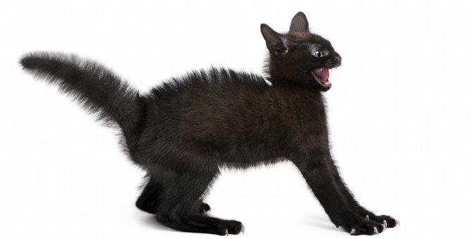 猫が『危険』を感じた時にする行動11選