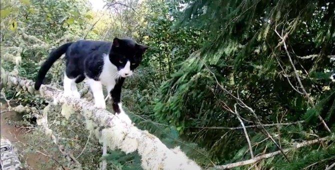 生死の淵で鳴き叫ぶ猫たち…猫と人間の涙腺崩壊する救助シーン6選!