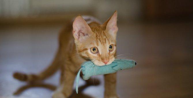 猫も『とってこい!』できる?