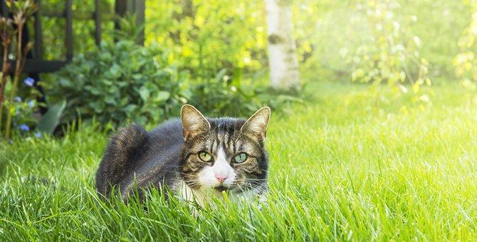 猫に忌避剤を使う効果とその他の猫よけ対策