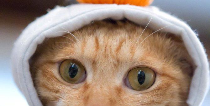佐賀の猫カフェおすすめ2選!映画「黒執事」に出演した猫がいるお店も!