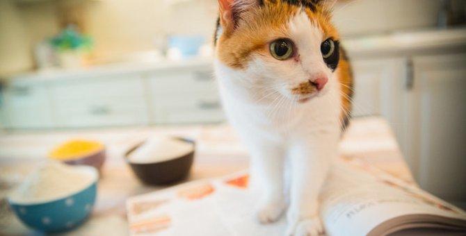 猫に納豆を与えるときの健康への効果と4つの注意点