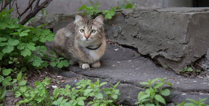 猫が斜視になる4つの原因