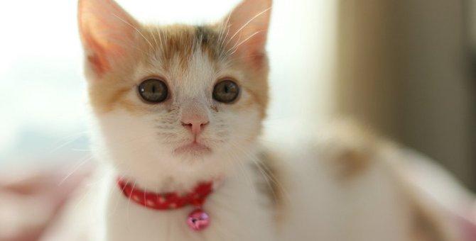 人気猫ランキングトップ3!特徴や性格