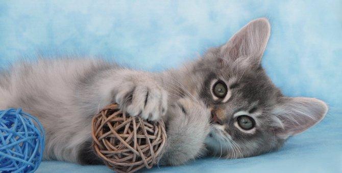 ソマリのブルーはどんな猫?写真で魅力を解説!