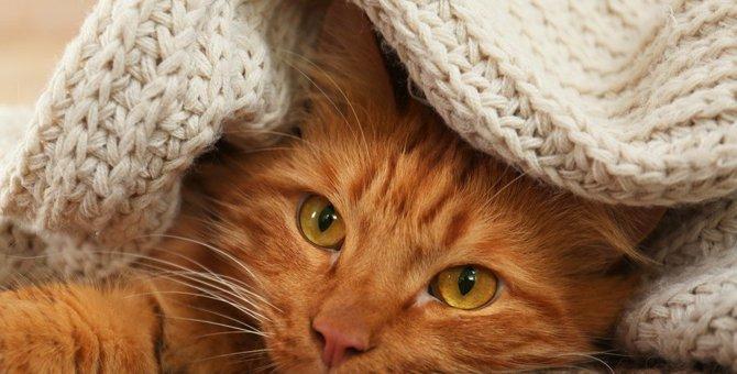 猫に『こたつ』を使う時の絶対NG行為3選!こんな環境だと怪我や病気につながるかも…?