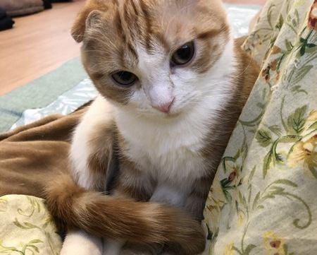 猫が「しっぽマフラー」する3つの理由