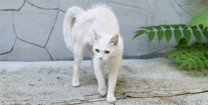 猫がしっぽを足の間にしまう時の心理5選