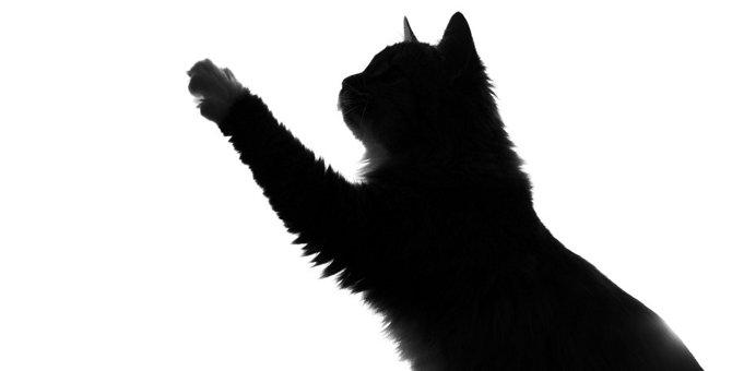 猫が飼い主に『お願いしたいこと』5つ