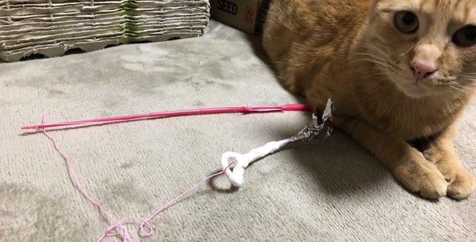 5分でできる!手作り猫じゃらしの作り方