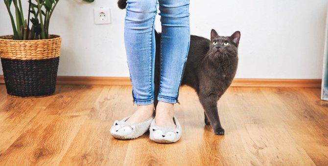 猫がついてくる5つの理由