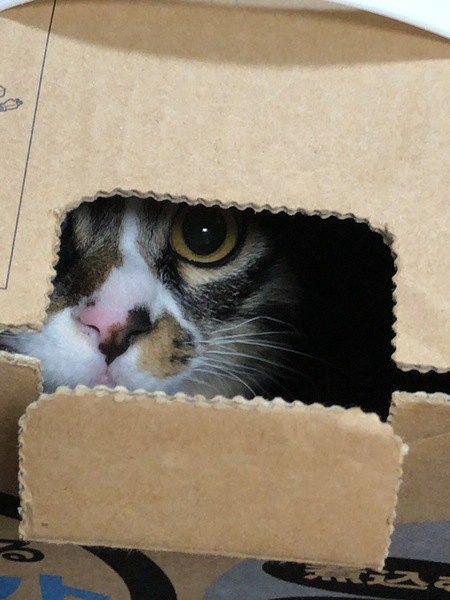 気がつくと見られてる!猫が隙間から飼い主を覗く理由3つ