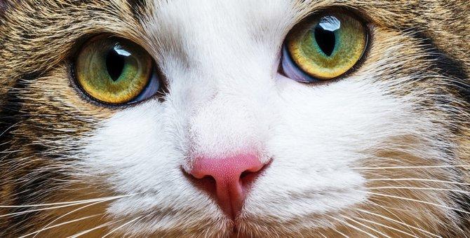 猫も結膜炎にかかる?感染の原因と注意したい症状