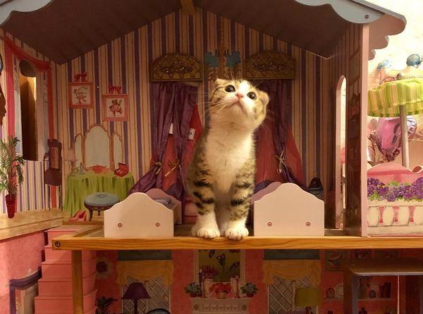 猫がいるけどおしゃれな部屋にしたい!両立させる方法5つ