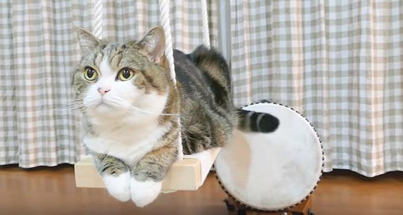 ごゆっくりご清聴ください。猫の尻尾バチで太鼓の演奏会!