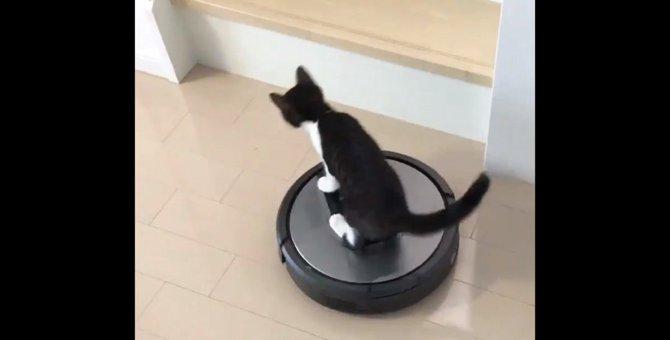 『ルンバライダー』出現!鮮やかに乗りこなす猫さんが人気急上昇!
