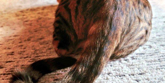 『尻尾ビンタ』!?猫が飼い主を尻尾で叩いてくる理由4つ