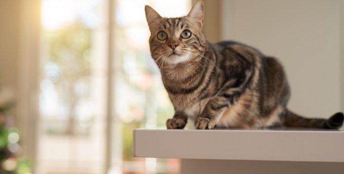 猫が食卓に登ってしまう時の対処法4つ