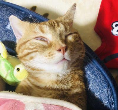 ちょっと不気味…猫が白目をむいて寝るのは問題ない?